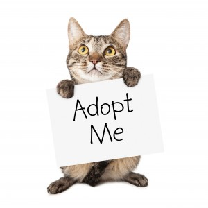 Joint Effort For Feline Friends @ Educational Therapy Center   Parkville   Missouri   United States